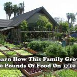 Learn How This Family Grows 6000 Pounds Of Food On 1/10 Acre