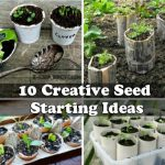 10 Creative Seed Starting Ideas