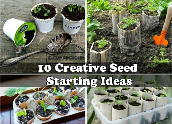 10 Creative Seed Starting Ideas