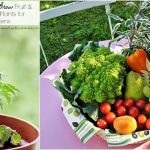 10 Easy To Grow Fruit & Vegetable Plants for Small Gardens