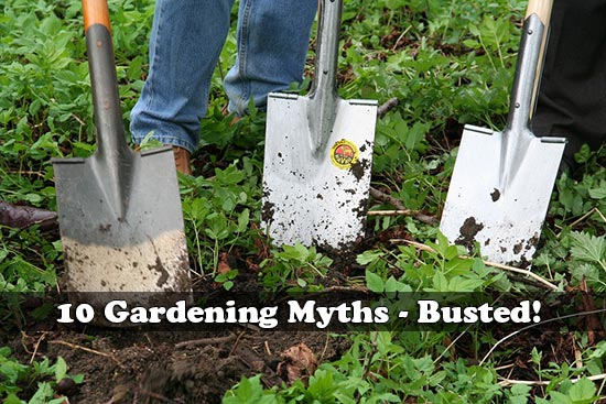 10 Gardening Myths - Busted!
