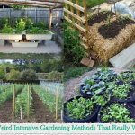 10 Weird Intensive Gardening Methods That Really Wor