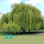13-Trees-You-Should-Never-Plant-In-Your-Yard