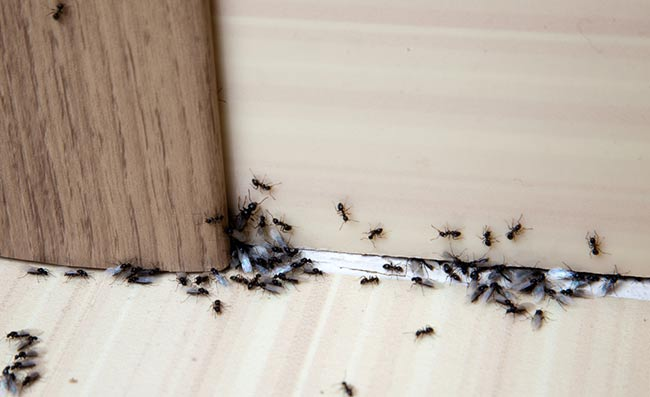 15 Ways To Keep Ants Away