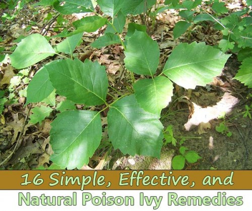 If you're an avid camper or an outdoor junkie, chances are you've had a few bouts with some nasty poison ivy—it's just a fact of life. It can be an unexpected setback, but a bit of poison ivy rash can be taken care of in a multitude of ways. Whether you have the many ingredients at home available, or you are caught with a rash out in the wild, this list of soothing measures can serve you and relieve pain, itchiness, blisters, and inflammation. Be it on the trail or in your backyard, try out these effective, natural, and easy cures and soothers for poison ivy.