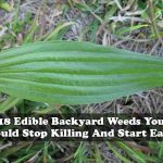 18 Edible Backyard Weeds You Should Stop Killing And Start Eating