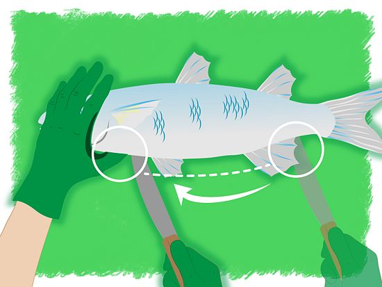4 ways to clean gut a fish for How to clean a fish