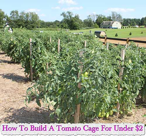 how to build tomatoes cage