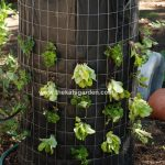 How To Make A Vertical Lettuce Garden