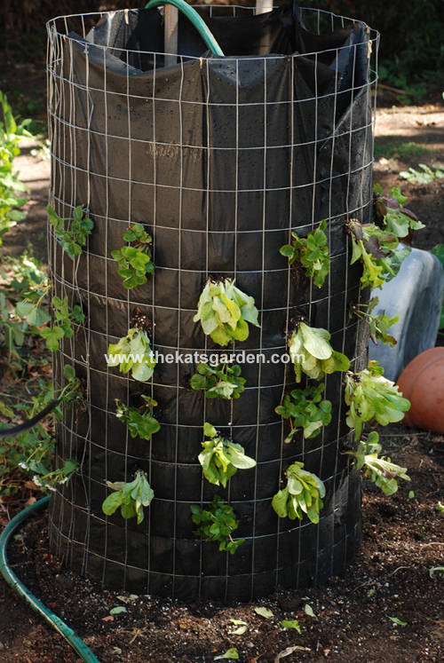 Build A Vertical Garden Pyramid Tower