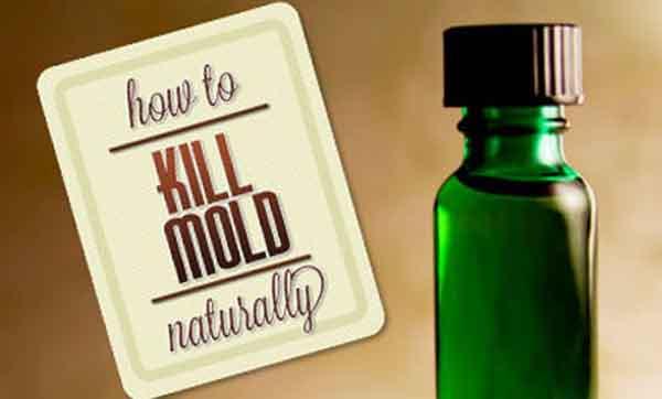 3 Ways To Kill Mold Naturally