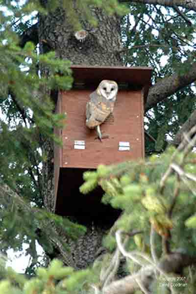 How To Make And Erect A Barn Owl Nestbox