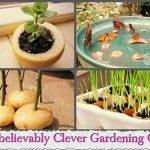 22 Clever Gardening Cheats