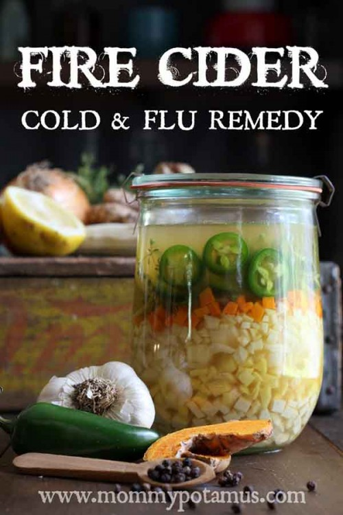 How To Make Fire Cider – Cold & Flu Remedy