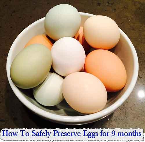Five Ways to Preserve Eggs   PreparednessMama