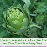10 Fruits & Vegetables You Can Plant Once And They Come Back Every Year