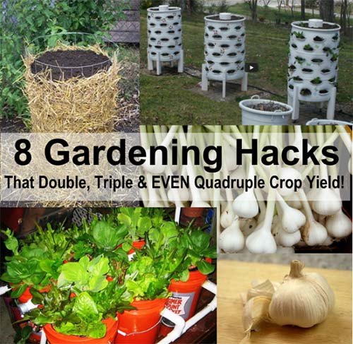 8 Outstanding Gardening Hacks That Can Double, Triple & Even Quadruple Crop Yield