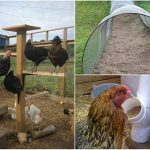 21-chicken-coop-upgrades-that-your-chickens-will-love