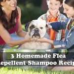 3 Homemade Flea Repellent Shampoo Recipes