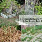 3 Most Popular Homemade Weed Killer Recipes