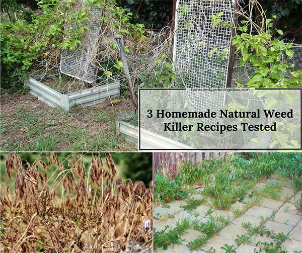 3 Most Popular Homemade Weed Killer Recipes