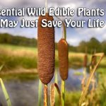 4 Essential Wild Edible Plants that May Just Save Your Life
