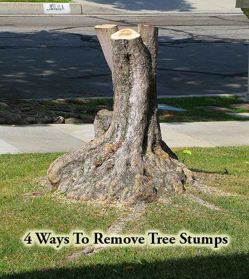 4 ways to remove tree stumps for How to make illuminated tree stumps