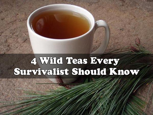 4 Wild Teas Every Survivalist Should Know