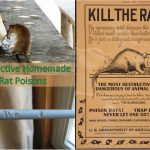 5 Homemade Rat Poisons