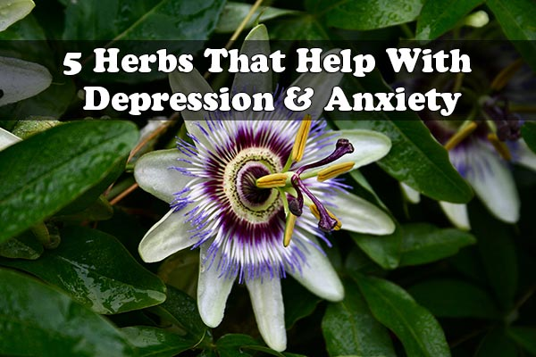 5 Herbs That Help With Depression & Anxiety