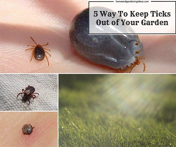 5 Things You Can Do To Keep Ticks Out of Your Garden
