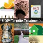 6 DIY Termite Treatments