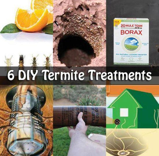 6 DIY Termite Treatments