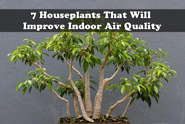 7 Houseplants That Will Improve Indoor Air Quality