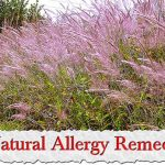 7 Natural Allergy Remedies.jpg