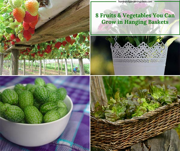 Fruits & Vegetables You Can Grow in Hanging Baskets