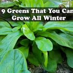 9 Greens That You Can Grow All Winter