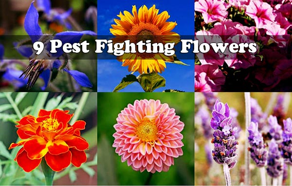9 Pest Fighting Flowers