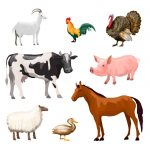 Best  Animals for Your Homestead