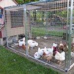 10 Ways To Build A Better Chicken Coop
