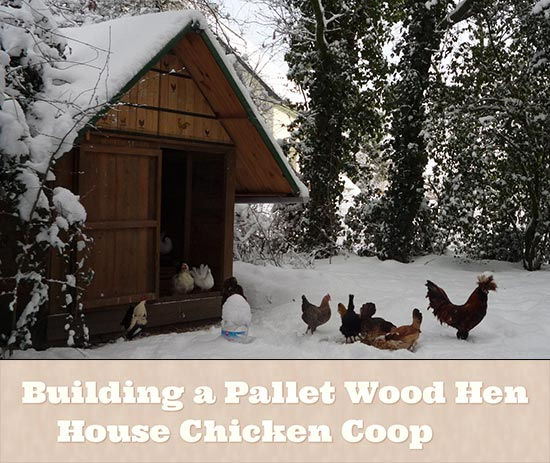 Building a pallet wood hen house chicken coop Chicken coop from pallet wood