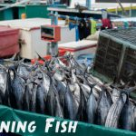 How To Can Fish: Salmon, Blue, Mackerel, Trout