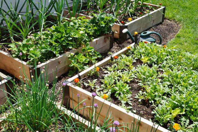 Cedar Raised Garden Beds
