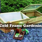 The Benefits of Cold Frame Gardening