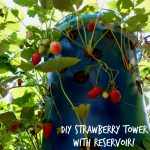 DIY STRAWBERRY TOWER WITH RESERVOIR!