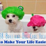 38 Brilliant Dog Care Ideas To Make Your Life Easier Tips For Dog Owners