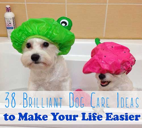 Dog-Care-Ideas