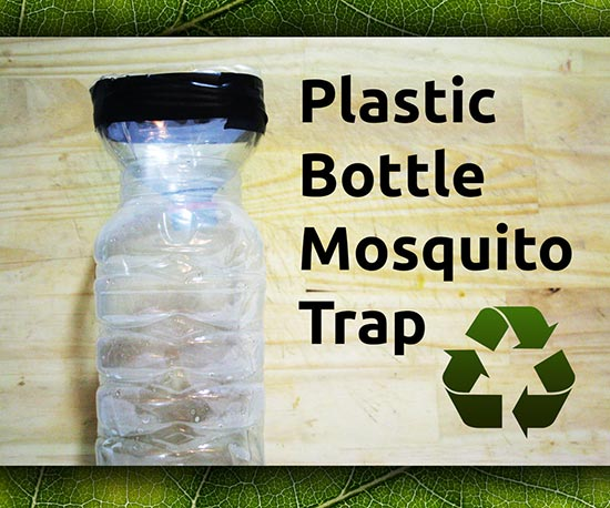 Easy To Make DIY Plastic Bottle Mosquito Trap