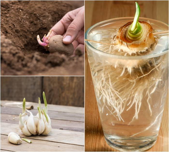 Foods That Will Re-Grow From Kitchen Scraps