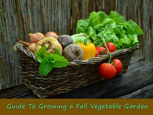Guide To Growing a Fall Vegetable Garden